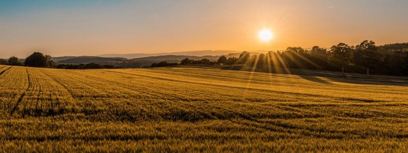 champs avec coucher de soleil