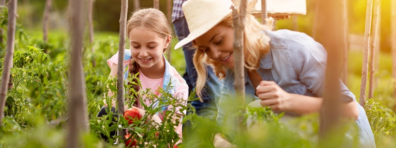 Mother with daughter in garden with tomatoes seedlings