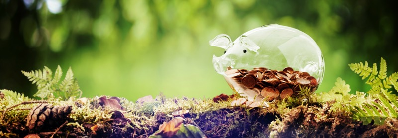 Panorama banner of a piggy bank in nature