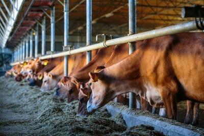 retraite msa secteur agricole