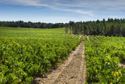 investir groupement foncier viticole